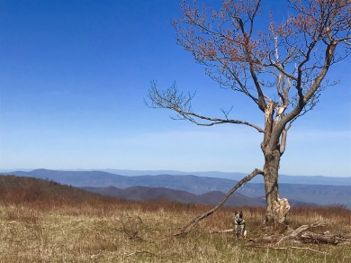 View from Big Meadow, Shenandoah National Park
